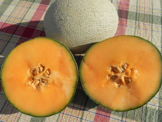 Shipping Melons | Seneca Vegetable Research, Inc